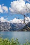 Залив ландшафта Kotor стоковое фото rf