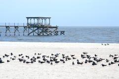 залив Мексика Миссиссипи свободного полета пляжа зоны Стоковое Изображение RF