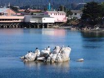 залив Монтерей Стоковое Изображение RF