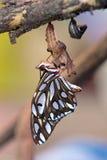залив fritillary бабочки Стоковое Изображение RF