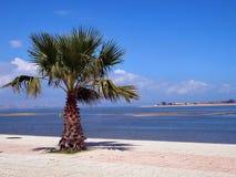 залив lisbon Португалия seixal Стоковая Фотография RF