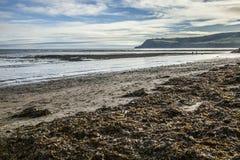 Залив ` s Робина Гуда, морская водоросль на пляже стоковое фото rf