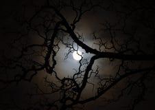 Залитый лунным светом силуэт ветви дерева на ноче Стоковое фото RF