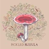 Замаринованный гриб сыроежки с листьями, специями и ягодами иллюстрация вектора