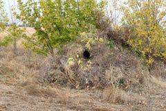 Замаскированное укрытие для спрятанной стрельбы птиц стоковое фото rf
