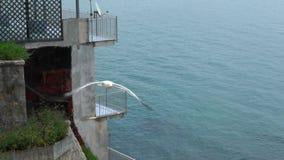 Замедленное движение общего летания чайки на среднеземноморском видит Муха чайки в Италии сток-видео