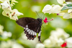 Замерзанный в цветке времени падает как раз по мере того как бабочка посещает его Стоковое Изображение