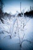 Замерзанный Стоковое Фото