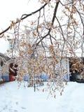 Замерзанный Стоковые Изображения RF