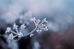 замерзано Стоковые Изображения RF