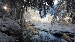 замерзано Стоковая Фотография RF