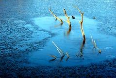 замерзано Стоковое Изображение