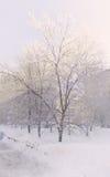 замерзать дня Стоковая Фотография RF