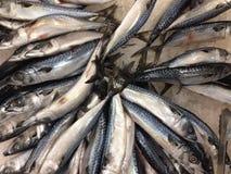 Замерзают много рыб Saba Стоковая Фотография