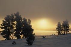 замерзая восход солнца Стоковое Изображение RF
