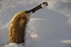 замерли банан, котор Стоковые Фотографии RF