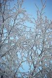 замерли ветви, котор Стоковая Фотография RF