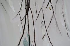 замерли ветвь, котор Стоковая Фотография