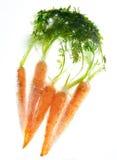 замерли моркови, котор Стоковая Фотография