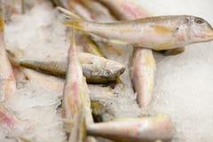 замерли рыбы, котор Рынок свежих рыб лещ Подсвинк-головки Продажа рыб в рынке Рыбы леща моря на льде сбывание льда рыб свежее Стоковые Изображения