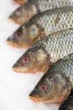 замерли рыбы, котор Рынок свежих рыб лещ Подсвинк-головки Продажа рыб в рынке Рыбы леща моря на льде сбывание льда рыб свежее Стоковое Изображение RF