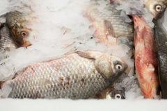 замерли рыбы, котор Рынок свежих рыб лещ Подсвинк-головки Продажа рыб в рынке Рыбы леща моря на льде сбывание льда рыб свежее Стоковая Фотография RF