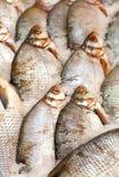 замерли рыбы, котор Рынок свежих рыб лещ Подсвинк-головки Продажа рыб в рынке Рыбы леща моря на льде сбывание льда рыб свежее Стоковые Изображения RF