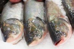 замерли рыбы, котор Рынок свежих рыб лещ Подсвинк-головки Продажа рыб в рынке Рыбы леща моря на льде сбывание льда рыб свежее Стоковая Фотография