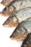 замерли рыбы, котор Рынок свежих рыб лещ Подсвинк-головки Продажа рыб в рынке Рыбы леща моря на льде сбывание льда рыб свежее Стоковое Изображение