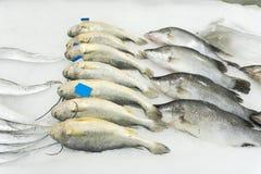 замерли рыбы, котор Стоковое фото RF