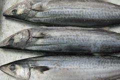 замерли рыбы, котор Стоковые Изображения
