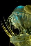 замерли рыбы, котор Стоковые Фотографии RF