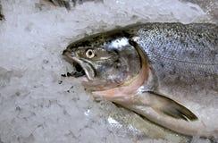 замерли рыбы, котор Стоковое Фото