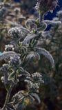 замерли цветок, котор стоковое фото rf