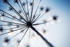 замерли цветок, котор Стоковые Изображения