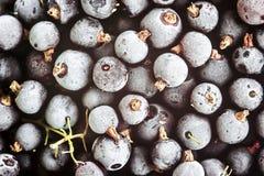 Замерли черная смородины, который Экологические ягоды для десертов, smoothie или варенья Источник ягод смородины органический вит Стоковое Изображение