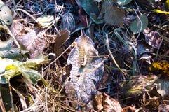 Замерли ледниковым щитом, который падение снега Стоковое фото RF