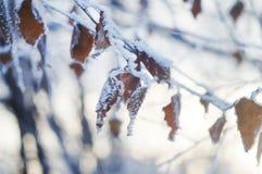 Замерли зимой, который ветви дерева Стоковые Фотографии RF