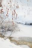 Замерли зимой, который ветви дерева Стоковые Изображения RF