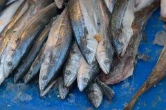 замерли рыбы, котор Стоковые Изображения RF