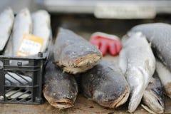 замерли рыбы, котор Стоковое Изображение RF