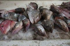 замерли рыбы, котор стоковые фото