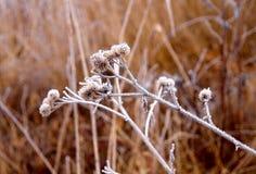 замерли цветки, котор Стоковая Фотография RF