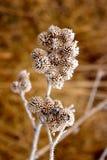 замерли цветки, котор Стоковое Фото