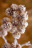 замерли цветки, котор Стоковое фото RF