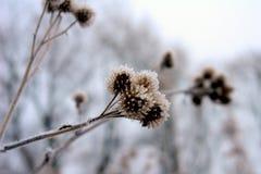 замерли цветки, котор Стоковые Изображения