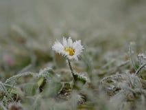 замерли цветок, котор Стоковые Изображения RF