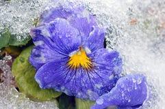 замерли цветок, котор Стоковое Изображение