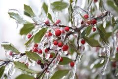 замерли ягоды, котор Стоковое Фото