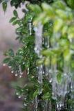 замерли bush, котор Стоковое Изображение RF